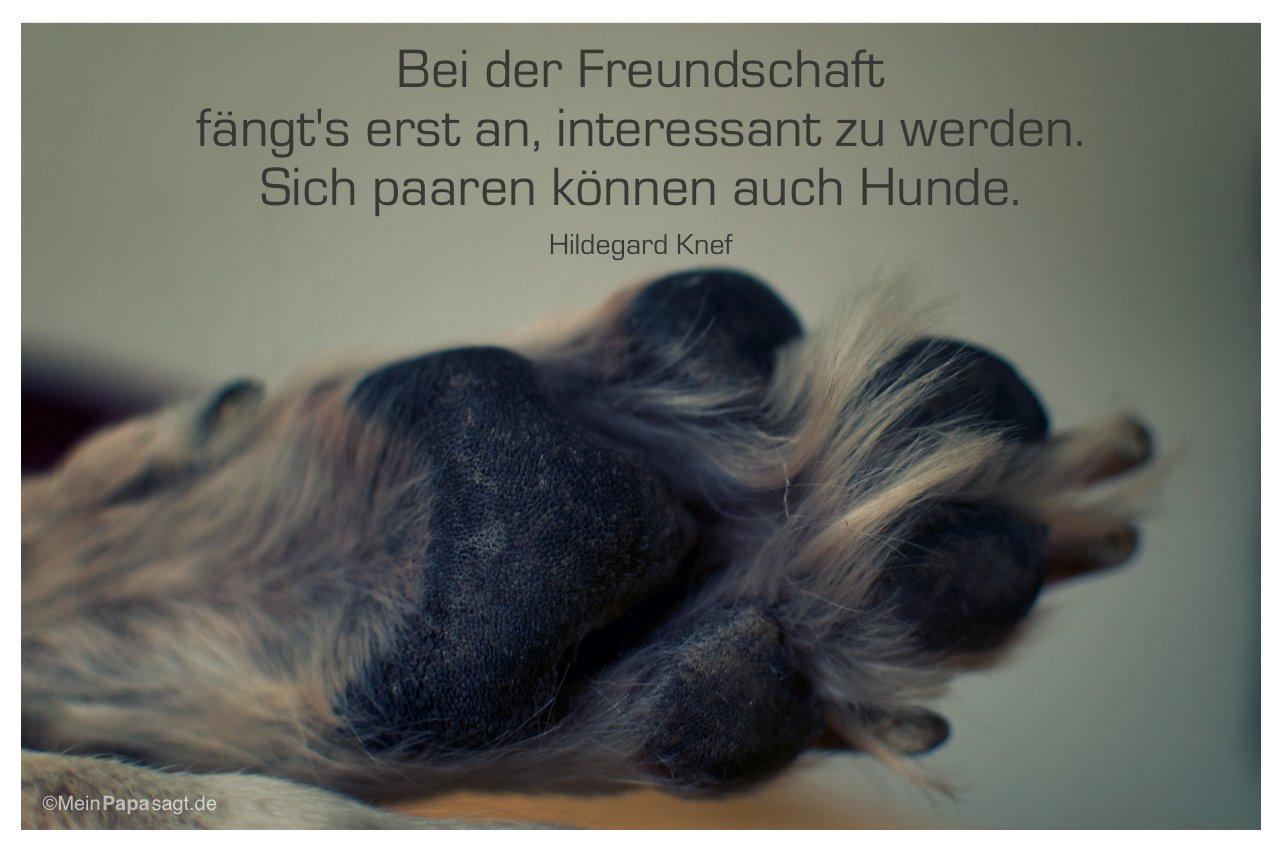 Hundepfote Mit Dem Zitat Bei Der Freundschaft Fangts Erst An Interessant Zu Werden