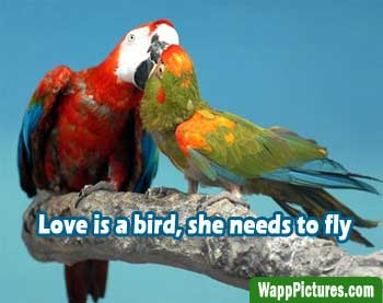 Love Birds Kissing Pictures