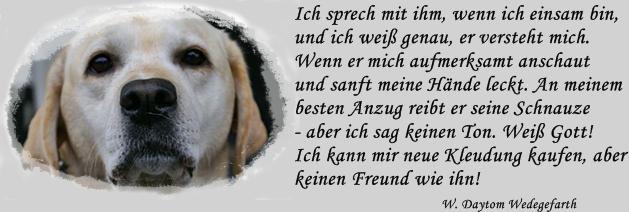 Und Frau Sagte Sein Name Ist Nicht Langer Wilder Hund Sondern Bester Freund Denn Er Wird Fur Immer Und Ewig Unser Freund Sein