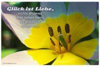 Blutenkelch Mit Dem Hermann Hesse Zitat Gluck Ist Liebe Nichts Anderes Wer Lieben