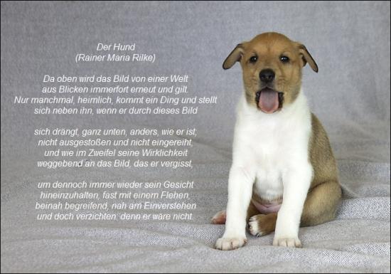 Ein Hund Der Bellt Ist Mehr Wert Als Ein Mensch Der Lugt Henry De Montherlant