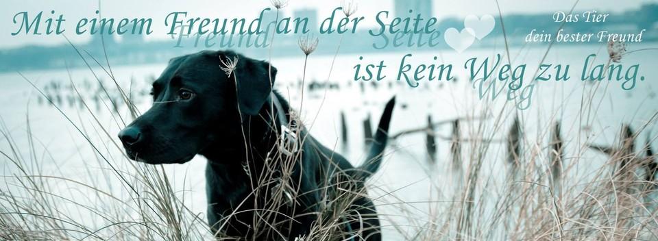 Zitate Hunde Bilder Zitate Ber Hunde Das Tier Dein Bester Freunds