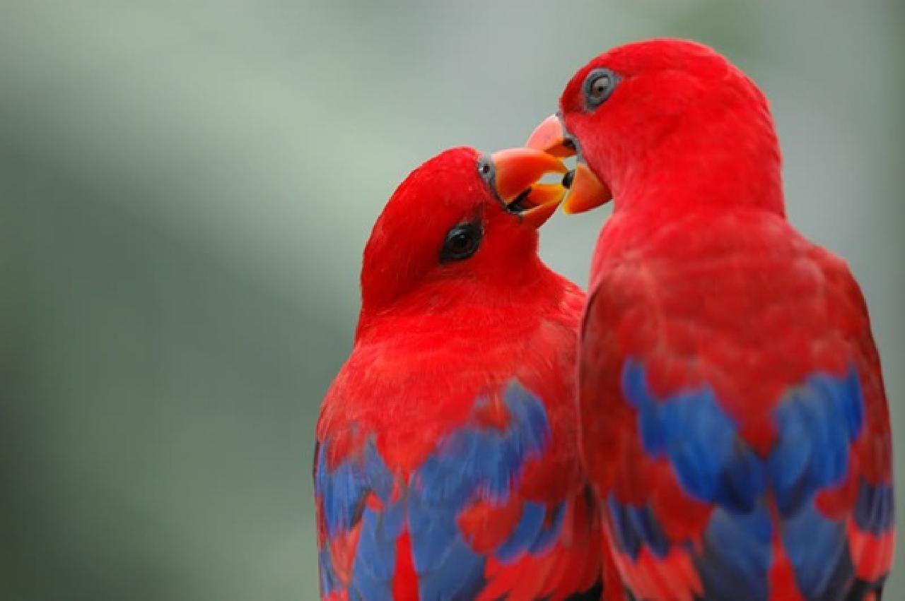 Lovely Love Birds Kissing