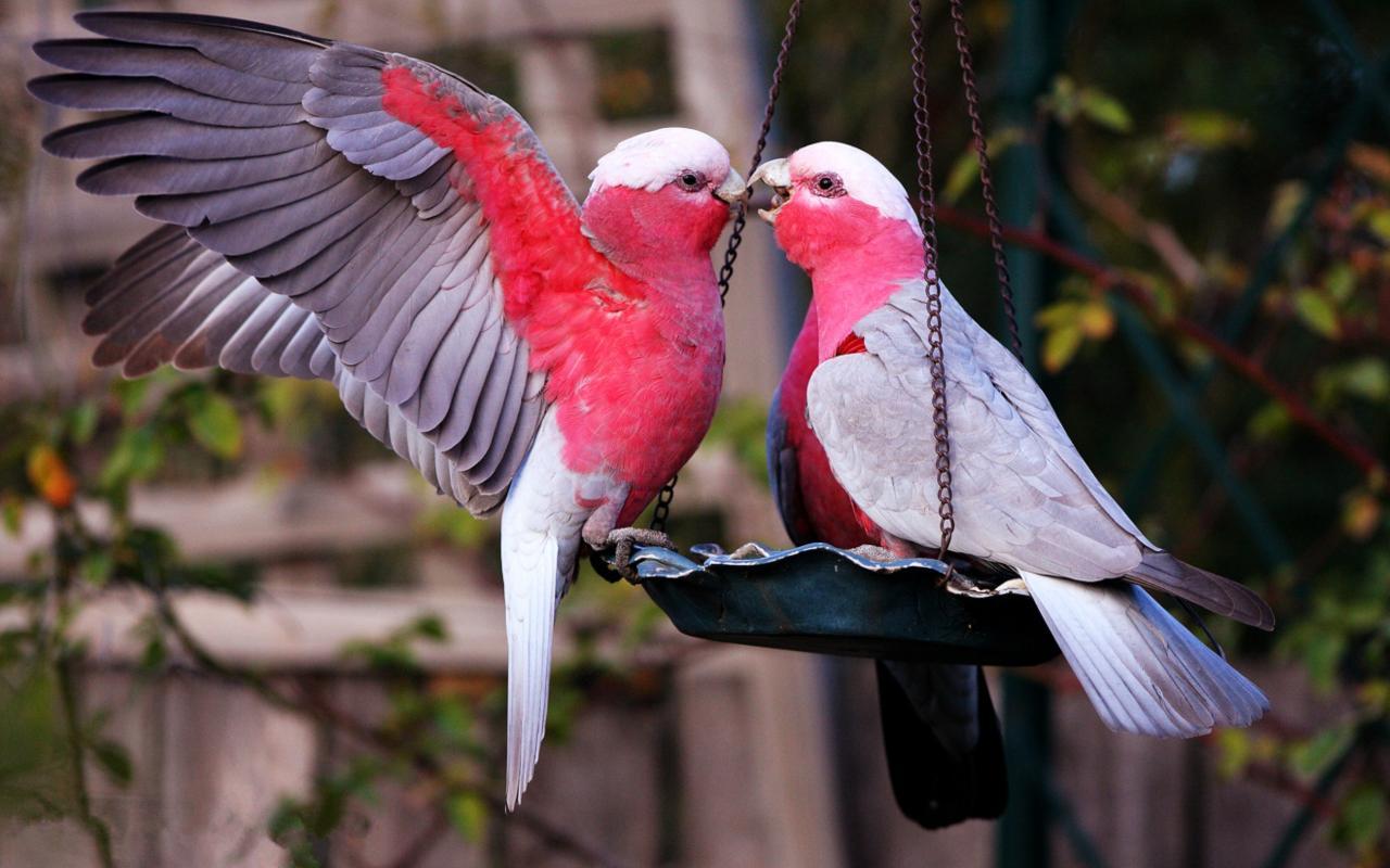 The Most Beautiful Bird Kiss