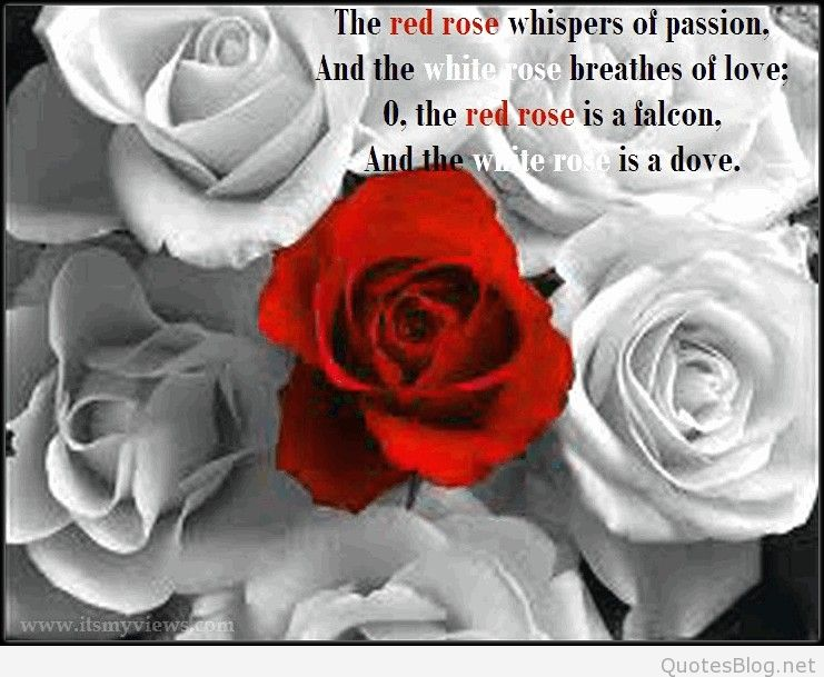 Latest Romantic Rose Flower Wallpapers With Love Quote