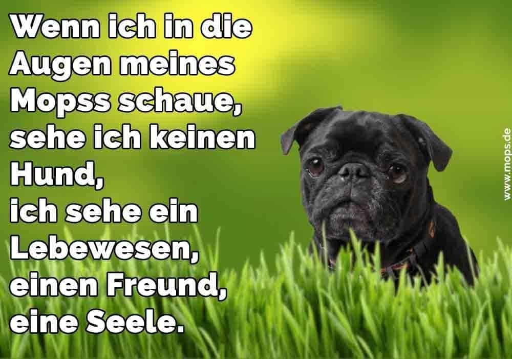 Sehe Ich Keinen Hund Ich Sehe Ein Lebewesen Einen Freund Eine Seele