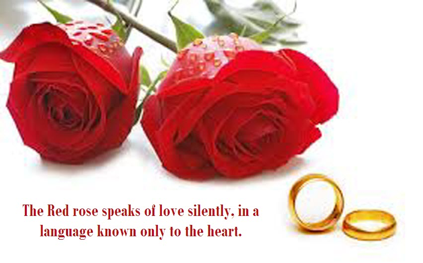 Love Quotes Red Rose