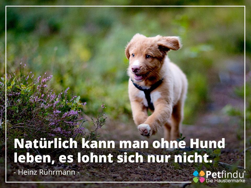 Zitat Von Heinz Ruhrmann