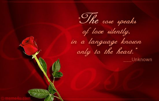 Explore Quotes Love Rose Quotes And More