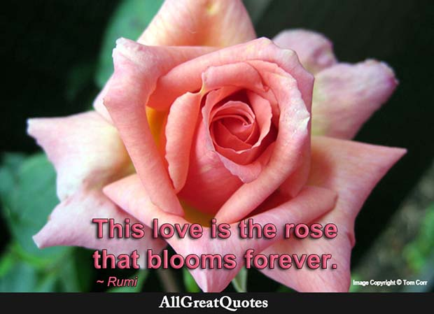 Rose That Blooms Forever Quote Rumi
