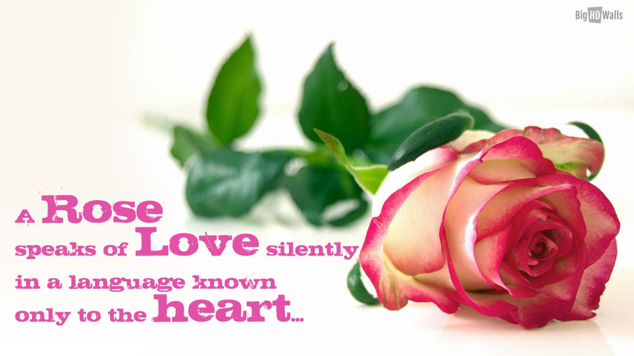 Rose Love Quotes