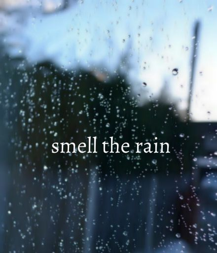 Smell The Rain Quotes Rain Water Outdoors Window Wet Smell