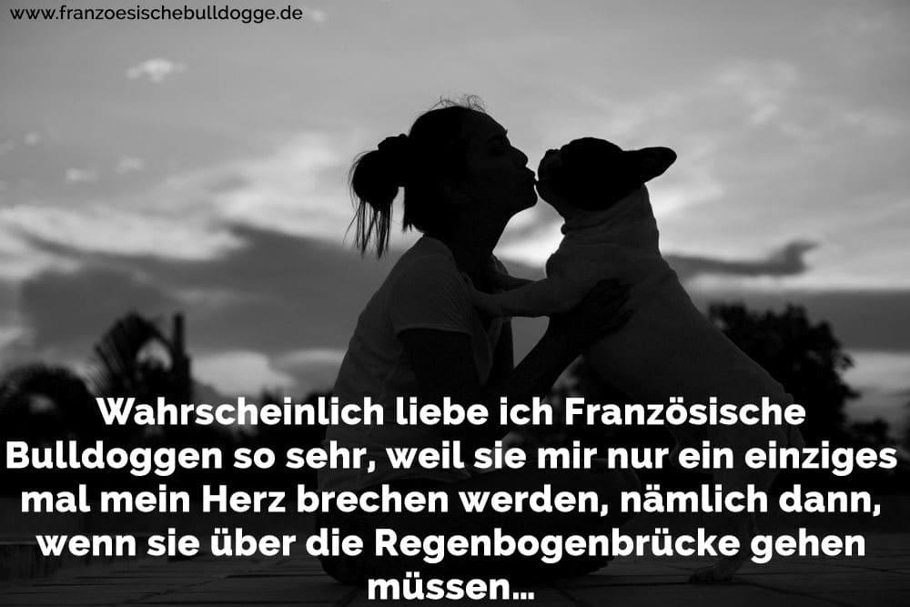Wahrscheinlich Liebe Ich Franzosische Bulldoggen So Sehr Weil Sie Mir Nur Ein Einziges Mal Mein Herz Brechen Werden Namlich Dann Wenn Sie Uber