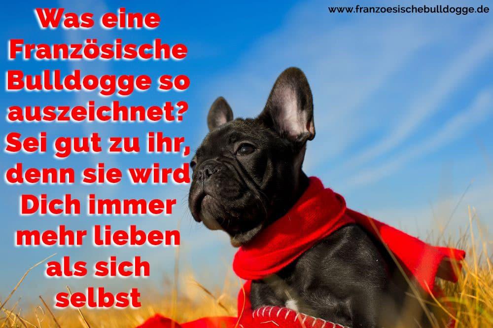 Was Eine Franzosische Bulldogge So Auszeichnet Sei Gut Zu Ihm Denn Er Wird Dich Immer Mehr Lieben Als Sich Selbst