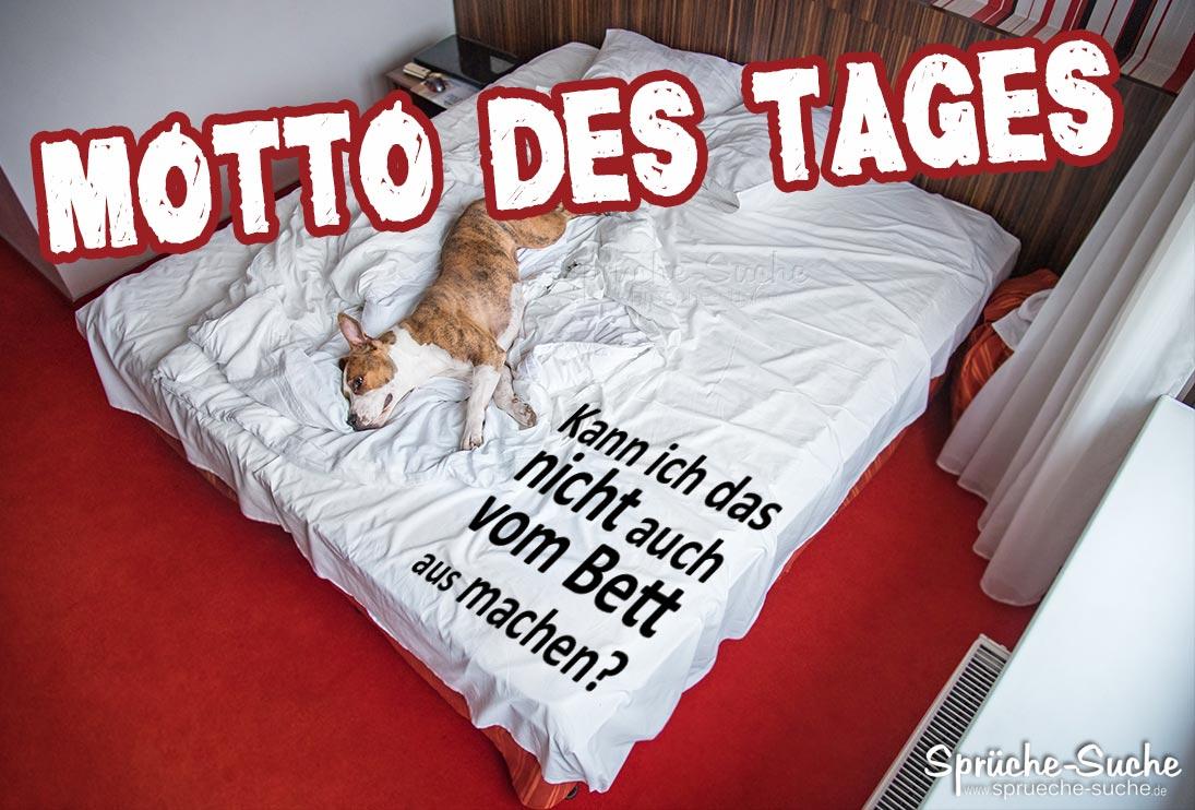 Hund Im Bett Motto Des Tages Spruch Spruche Suche