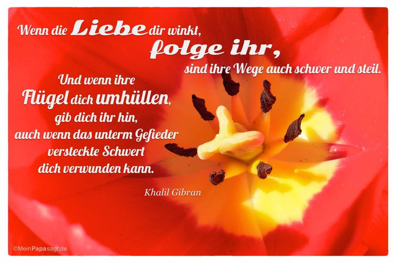 Image Result For Zitate Der Kleine Prinz Liebe