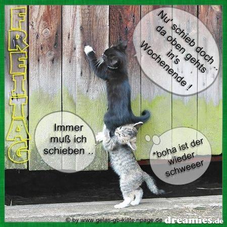 Image Result For Zitate Mit Bilder Kostenlos