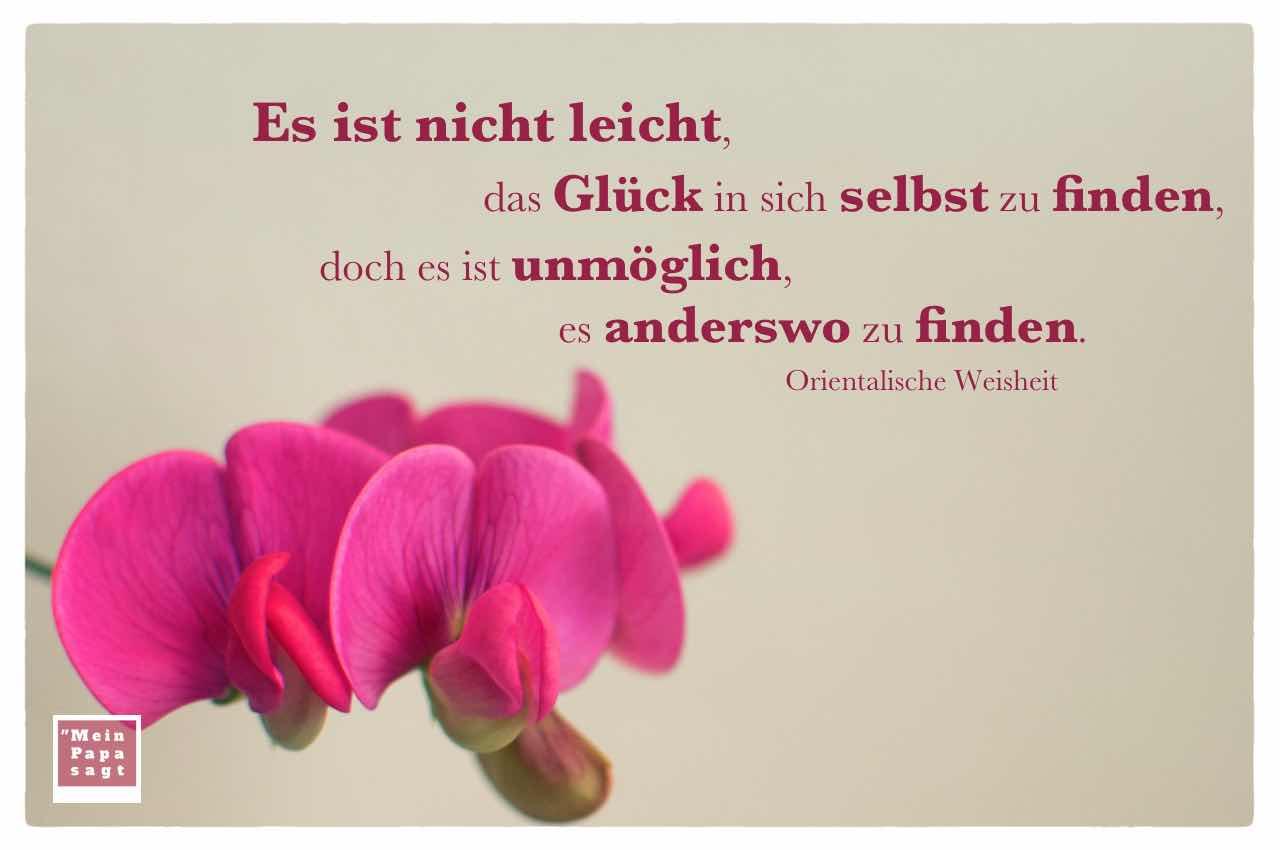 Image Result For Zitate Leben Lieben Gluck