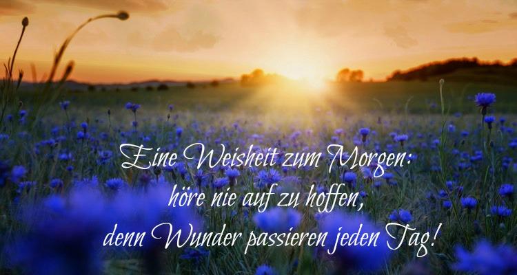 Guten Morgen Bilder Blumenwiese Zitat Sonne Wunder Passieren Guten Morgen Bilder Kostenlos Zum Runterladen Und Spruche Zum Teilen