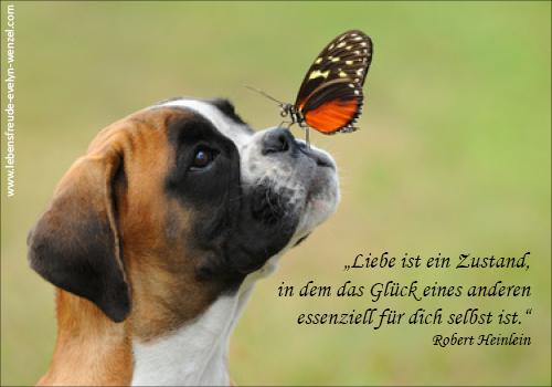 Zitat Liebe Und Gluck