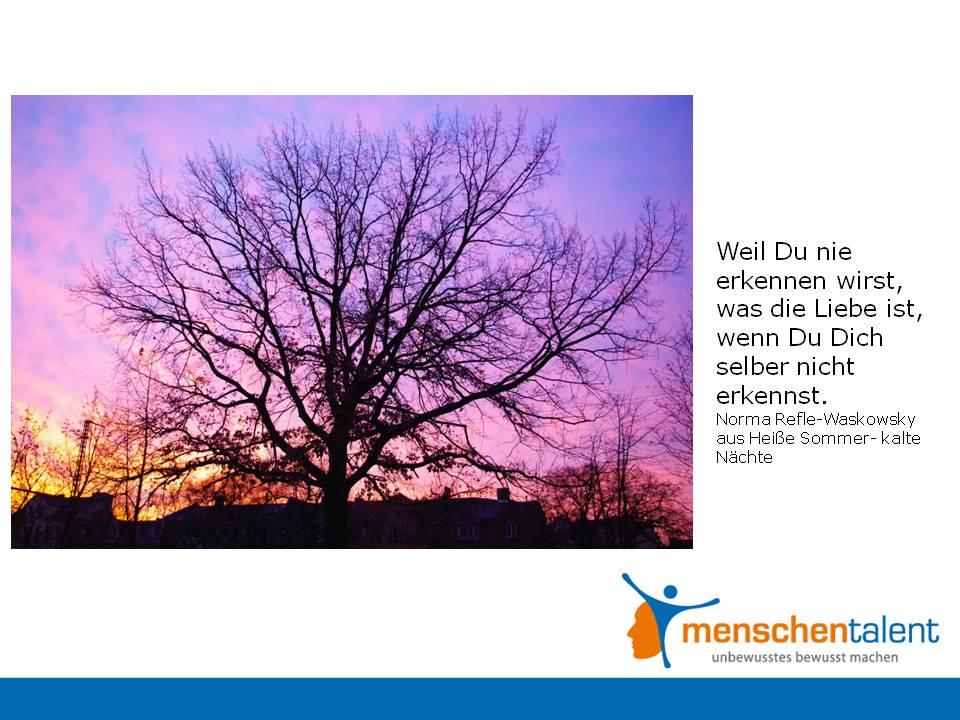 Ses Zitat Stammt Aus Einer Wundervoll Berhrenden Ueirrlufer Der Liebe Mit Baum Und Borkeuc Von Norma Und Ich Komme Nicht