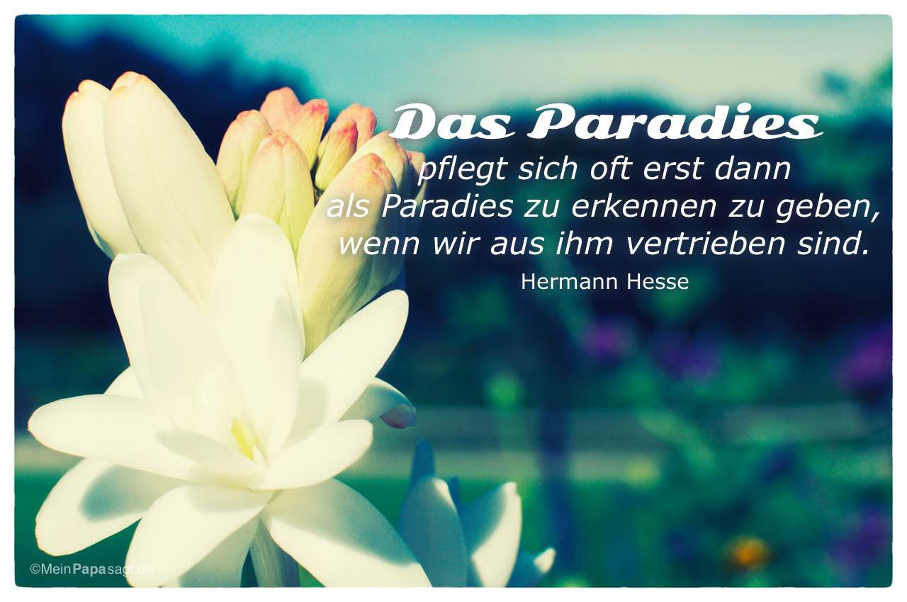 Hermann Hesse Zitate Trauer Image Collections Besten Zitate Hermann Hesse Zitate Trauer Image Collections